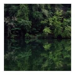 Green (ngbrx) Tags: trees lake reflection forest schweiz switzerland see pond suisse bern svizzera wald bume berne spiegelung berner interlaken bernese reflektion mirroring oberland weiher ringgenberg burgseeli