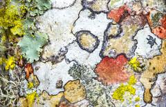 2016-04-21 23-23-41 (B,Radius12,Smoothing6)-Edit (Boy of the Forest) Tags: statepark usa macro green america us unitedstates florida unitedstatesofamerica northamerica environment sarasota lichen fl 60mm lichens symbiotic myakka srq 2x symbiosis myakkariverstatepark protectedarea federalland myakkariversp symbioticorganism venus60mm 60mmvenus