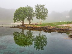 Lindy, Norway (Vest der ute) Tags: trees sea mist seascape norway fog reflections mirror swans rogaland fav25 fav200 g7x ryksund