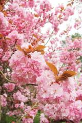 IMG_4570 (Irina Souiki) Tags: parcdesceaux france paris sceaux flowers nature parc park