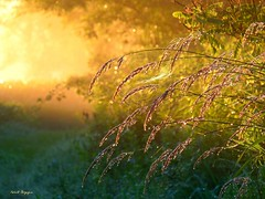 Gocce di rugiada (BORGHY52) Tags: italy primavera nature fog landscape alba natura piemonte nebbia rugiada paesaggio controluce mattino emozioni vegetazione moncalieri provinciaditorino paesaggioagreste