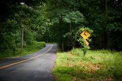 Deer crossing (tdalpert) Tags: road trees sign forest woods deer caution winding careful