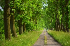 inviting (JoannaRB2009) Tags: green nature spring trees alley avenue path countryside dzkie lodzkie polska poland landscape