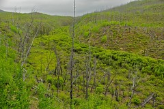 Little Fox Creek Valley on a Rainy Day (MIKOFOX  Show Your EXIF!) Tags: canada green june creek landscape spring yukon valley forestfire aspen spruce alder wildfire burnarea xt1 foxlakeburn fujifilmxt1 xf18135mmf3556rlmoiswr mikofox foxlakefire1998