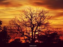 Atardecer detrás del árbol (foto lufo) Tags: atardecer naranja rojiso sombra detras del arbol sunset relevante nature mejor reciente