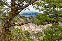 Over Looked (SewerDoc (2 million views)) Tags: river landscape canyon explore yellowstonenationalpark wyoming grandcanyonyellowstonerivertreescliff