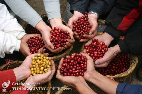 Coffee Pickers Display a New Harvest