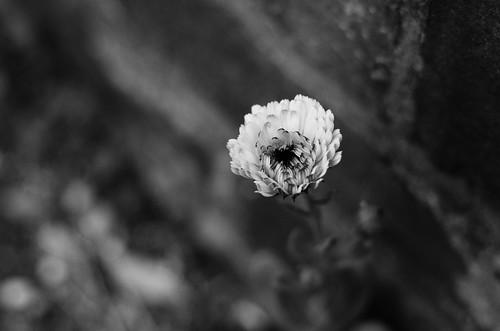 Marigold & Wall ©  Still ePsiLoN