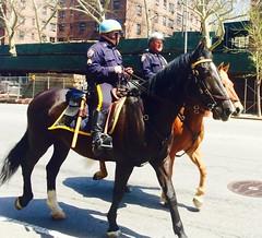 New York Police Horses (Lonfunguy) Tags: nyc horses horse usa ny nypd mountedpolice policehorses