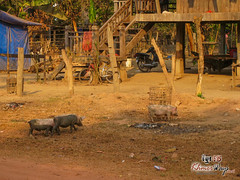 Local Farm - Mekong Discovery
