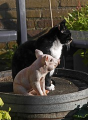 You know, they can sit like this all day, without saying a single word. (Eduard van Bergen) Tags: wood friends cats sun nature girl animals lady sisters silver garden gold katten warm day brothers pussy buddy together ami silence harmony pigs sit uni pal mate dame companion comrade dieren pussycat poezen freund amie misspiggy gasket morningsun vriend biggen gezel