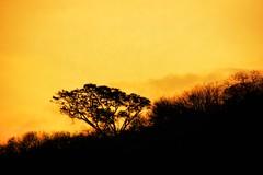 ON THE ROAD. (NIKONIANO) Tags: light sunset paisajes naturaleza sun nature sunrise landscape camino michoacn ontheroad morningwalk aube enelcamino nikoniano sergioalfaroromero paisajesdemichoacn