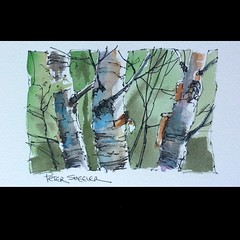 Aviary Photo_131076663438053673 (sheelerart) Tags: original trees canada art architecture ink watercolor painting landscape countryside video watercolour birch penandink birchtrees youtube winsorandnewton paintingaday imagesofcanada youtubers moleskinearts