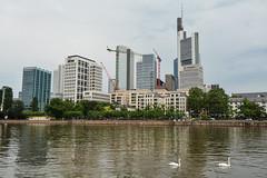 Schwne in Frankfurt auf dem Main (mercatormovens) Tags: frankfurt main schwne hochhuser commerzbank mainufer wolkenkratzer
