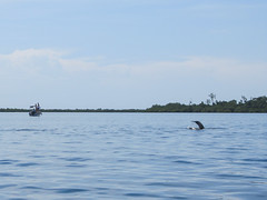 "Bahia de los Dolfines <a style=""margin-left:10px; font-size:0.8em;"" href=""http://www.flickr.com/photos/127723101@N04/27058330150/"" target=""_blank"">@flickr</a>"