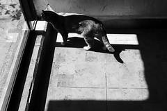 (Ivn Rubn) Tags: light shadow bw luz monochrome animal contrast cat time shapes sombra bn gato rincones contraste instant gloom formas corners tiempo instante penumbra monocromtico