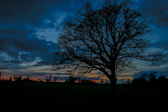 Silhouette (Costigano) Tags: sunset sunlight colour tree silhouette canon landscape eos outdoor dusk
