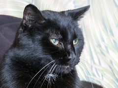 My Old Lady (knightbefore_99) Tags: cat chat gato black noir negro cute pretty 18 lady watch kitty girl sweet eighteen wonderful regal