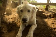Vainilla (jym_08) Tags: dog perro vanilla rancho vainilla