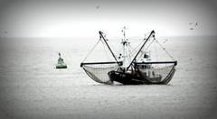 3270 (roberke) Tags: sky water birds grey boat belgium noordzee westvlaanderen northsea oostende flanders vissersboot