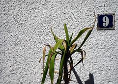 Stadtpalme (ts_83) Tags: nine palm number palme augsburg neun