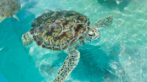 life sea summer beach water turtle farm mujeres isla