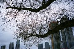 untitled 0529_14 (Levi Wedel) Tags: city urban calgary film analog 35mm fuji olympus alberta stylus fujifilm 100 epic mjuii reala yyc