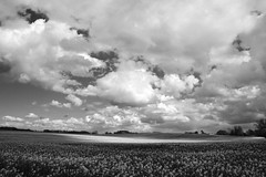 Dishley #7 sw (victorlaszlo73) Tags: sonnig frhling wolkig mecklenburgvorpommern