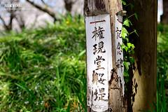 (Po Yao) Tags: tokyo nikon   sakura    janpan 2470mm     d800e