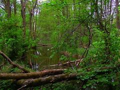 Bach vom Boissower See (Sophia-Fatima) Tags: nature deutschland natur bach brook naturschutzgebiet mecklenburgvorpommern neuenkirchenersee boissowersee