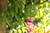 Spidernet (Kasia Alexander) Tags: morning light hairy sun spider legs bokeh background colourful tlo spidernet swiatlo nogi pajeczyna pajak kolorowe slonce poranne owlosione