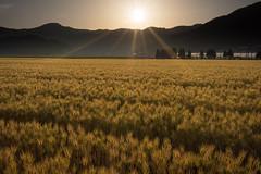 201505263086 (Gansan00) Tags: japan landscape sony  yamaguchi      ilce7r