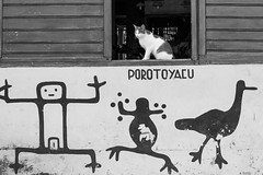 The Cat in the Window, Iquitos (Geraint Rowland Photography) Tags: animal cat feline iquitos hieroglyphics blackandwhitephotography catportrait animalportraits streetcats canonphotography catinawindow peruvianart southamericantravel peruvianculture jungleperu streetartperu porotoyacu visitperu geraintrowlandphotography peruviancats visitiquitos