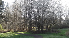 20160331_090423 (ks_bluechip) Tags: creek evans trails preserve sammamish usa2106