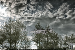 Liquid sky (AirUK-Photography) Tags: trees sky lake reflection water pond ripple inverted northala
