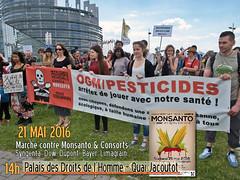 #MaMStrasbourg #MaM2016 : 21 mai 2016 Marche contre Monsanto et Consorts  Strasbourg (Amis de la Confdration Paysanne Alsace) Tags: monsanto ogm 2016 pesticides biotechnologie marchagainstmonsanto nongmofoodworld marchecontremonsanto sansogmgylphosate