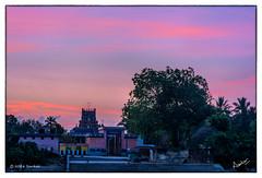 KRP20160415 (msankar4) Tags: nataraja siva tamil nadu konerirajapuram myladuthurai