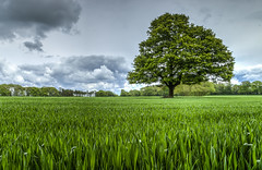 Herriard Park Hampshire. (THE NUTTY PHOTOGRAPHER) Tags: superb simply