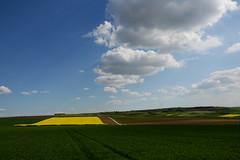a spring landscape | Eine Frhlingslandschaft (rainbowcave) Tags: sky clouds tracks felder wolken vineyards fields landschaft raps rapeseed rheinhessen weinberge kleinwinternheim