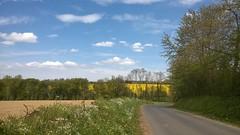 22. Maisoncelles-Pelvey (@bodil) Tags: sky cloud france tree landscape ciel normandie nuage paysage arbre calvados rapeseed colza maisoncellespelvey