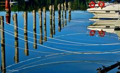 narut (Paivi Hannele) Tags: blue sea reflection nature animals finland landscape boat meri naantali canonphoto thisisfinland visitfinland ourfinland