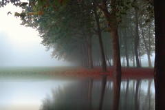 After the rain (Samfiore72) Tags: park morning trees italy reflection nature colors beautiful rain spring woods beautifulinnature