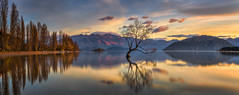 Wanaka Lake NZ Sunrise (Bjorn Baklien) Tags: longexposure newzealand panorama lake mountains colour tree water clouds sunrise landscape willow nz wanaka poplars canoneos5dmarkiii zeissotus1455ze