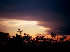Horizon Gold (ClvvssyPhotography) Tags: sunset tree outdoors photography horizon line skyscapes