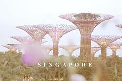 Gardens by the bay (Atika Safira Herman) Tags: gardens by bay singapore pastel trave