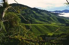 Cameron Highlands, Landscape (blauepics) Tags: clouds garden landscape highlands tea wolken hills cameron malaysia plantation landschaft tee garten malay hgel hochland plantagen