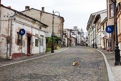A dog resting in the streets of Slatina (Haukur H.) Tags: city canon romania sigma50mm slatina canon6d sigma50mmf14exdg judeulolt roadtoslatina