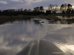 09 February 2016: When the creek meets the road (RobinMSP) Tags: road winter nature creek flooding afterthestorm tide maryland easternshore hightide dailywalk superhightide maidinsunphotography february2016k