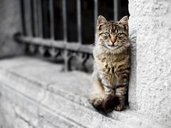 Street cat 139 (Yalitas) Tags: pet cats cat canon kat feline chat kitty gato felino katze katzen kot kedi kass gatta streetcat kotka  kocka  katte  katzchen kottur