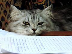 If We Can Read (Khaled M. K. HEGAZY) Tags: blue pet brown white black animal closeup cat paper eyes nikon feline egypt indoor cairo coolpix maadi p520